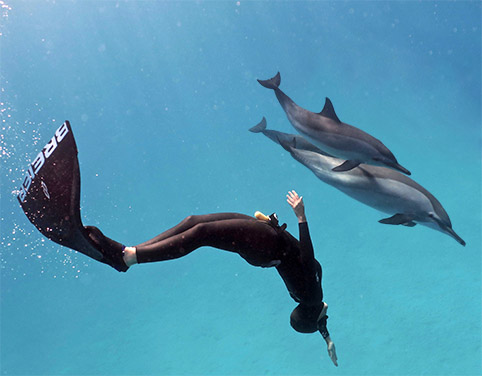 Croisière Qi Gong et nage avec les dauphins
